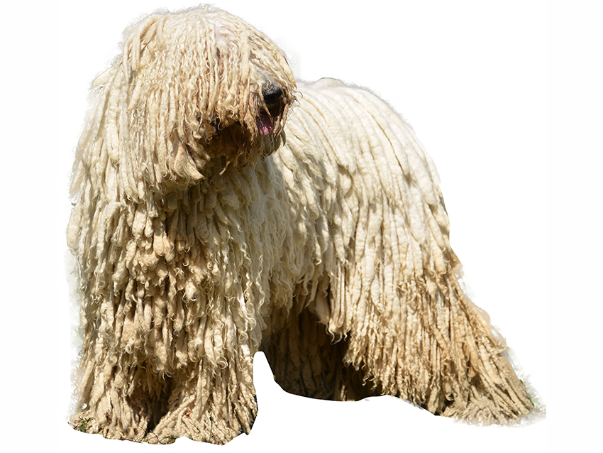 Mop Dogs Video
