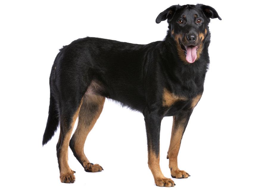 Big Dog Running Races