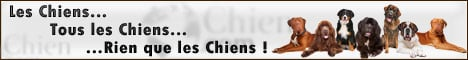 Chien .com : Le Monde Francophone du Chien