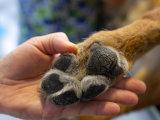 La santé de votre chien