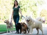 Faire garder ou transporter votre chien