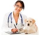 Vous aimez votre chien ? Assurez sa santé !