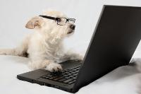 Forum chien & chiot