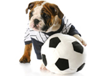Sport canin & Expositions canines
