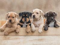 Les chiens>Adopter un chien