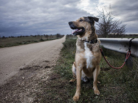 L'abandon de chien