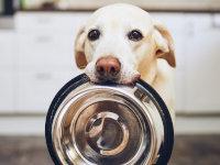 S'occuper de vos chiens>Alimentation