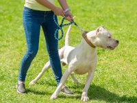 S'occuper de vos chiens>Comportement & Éducation