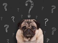 Psychologie du chien. Communiquer & interagir avec son chien