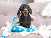 Les problèmes comportementaux du chien
