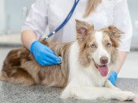 S'occuper de vos chiens>Santé & Maladies