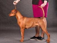Les chiens de race & Le pedigree du chien